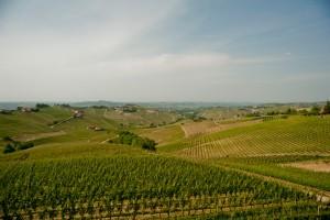 Sottimano vigne